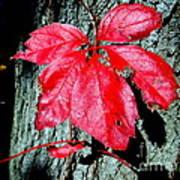 Fall Red Leaf Art Print