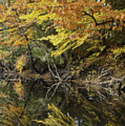 Fall Reflections Art Print