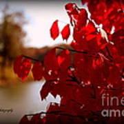 Fall Scenery Art Print