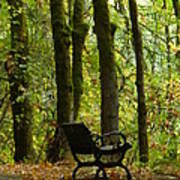 Fall Seating  Art Print