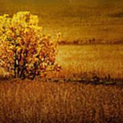 Fall Tree And Field #2 Art Print