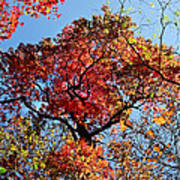 Fall Trees Of Wnc Art Print