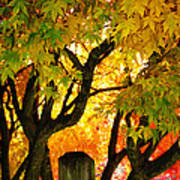 Fall Trees On A Country Road 3 Art Print