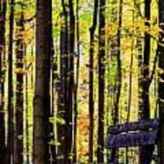 Fall Woods In Michigan Art Print