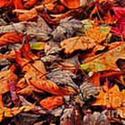 Fallen Colors Art Print