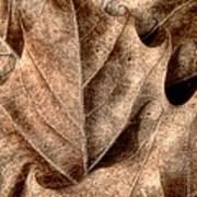 Fallen Leaves I Art Print
