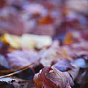 Fallen Leaves Road Print by Irina Wardas