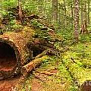 Fallen Rainforest Giant Art Print