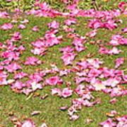 Fallen Rhododendron Art Print