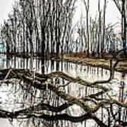 Fallen Tree Reflection Art Print
