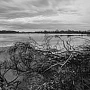 Fallen Trees At The Lake Art Print