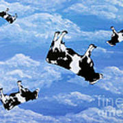 Falling Cows Art Print
