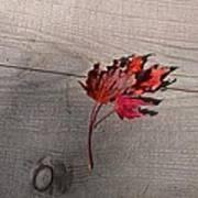 Falling Leaf Art Print