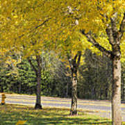 Falling Leaves From Neighborhood Beech Trees Art Print