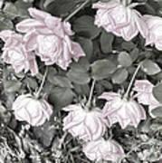 Falling Roses Art Print