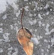 Fall's Fallen Meets Spring Sunshine Art Print