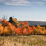 Fall's Splendor - Casper Mountain - Casper Wyoming Art Print