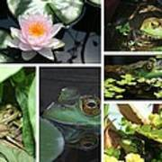 Family Of Frogs Collage Art Print