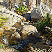 Fan Palm Leaves And Shadows Over Andreas Creek Rocks In Indian Canyons-ca Art Print