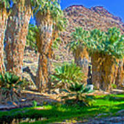 Fan Palms By The Creek In Lower Palm Canyon In Indian Canyons Near Palm Springs-california Art Print