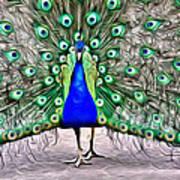 Fanning Peacock Art Print