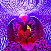 Fantasy Flower 8 Art Print