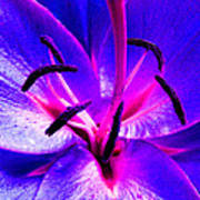 Fantasy Flower 9 Art Print