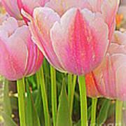 Fantasy In Pink - Tulips Art Print