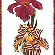 Fantasy Iris July 2013 Art Print