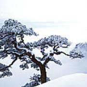 Fare-well Pine Tree Art Print