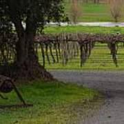 Farm And Vineyard Art Print