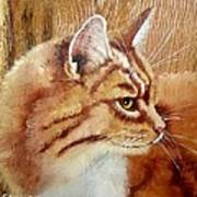 Farm Cat On Rustic Wood Art Print