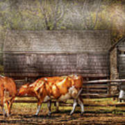 Farm - Cow - A Couple Of Cows Art Print by Mike Savad