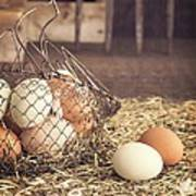 Farm Fresh Eggs Art Print