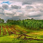 Farm - Organic Farming Art Print