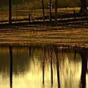 Farm Pond Reflections Art Print