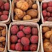 Farm Potatoes Art Print