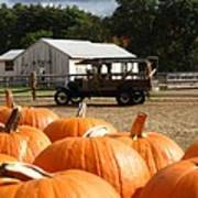 Farm Stand Pumpkins Art Print by Barbara McDevitt