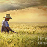 Farmer Checking His Crop Of Wheat  Art Print