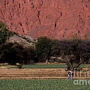 Farmer In Field In Northern Argentina Art Print