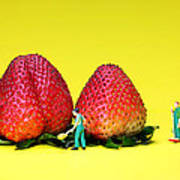 Farmers Working Around Strawberries Art Print