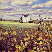 Farmhouse And Grapevines Art Print