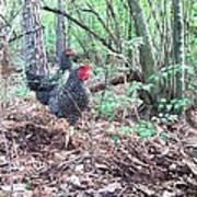 Farmyard Life With The Hens Art Print