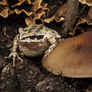 Fat Frog Art Print by Jean Noren