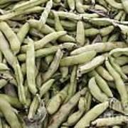 Fava Beans Art Print