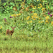 Fawn In Flowers Art Print