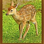 Fawn Poster Image Art Print