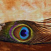 Feather Design Art Print