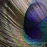 Feather Fan Art Print