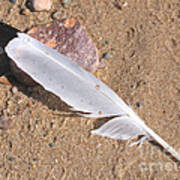 Feather On Damp Sand Art Print